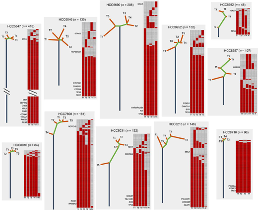 Figure 3: Phylogenetic trees of 11 hepatocellular carcinomas constructed on the basis of whole exome sequencing.
